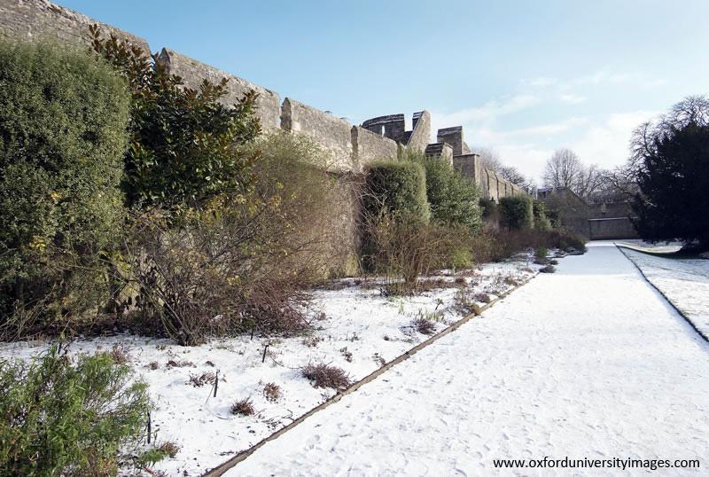 Snowy garden path