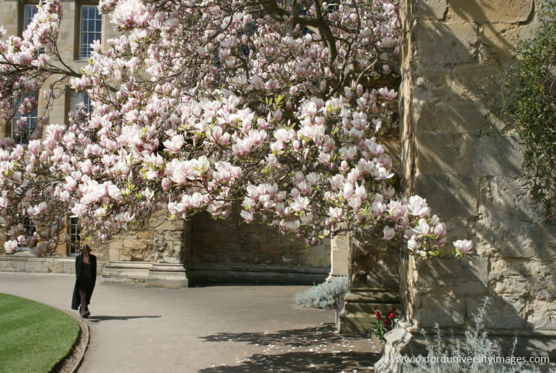 Magnolia and Chapel entrance