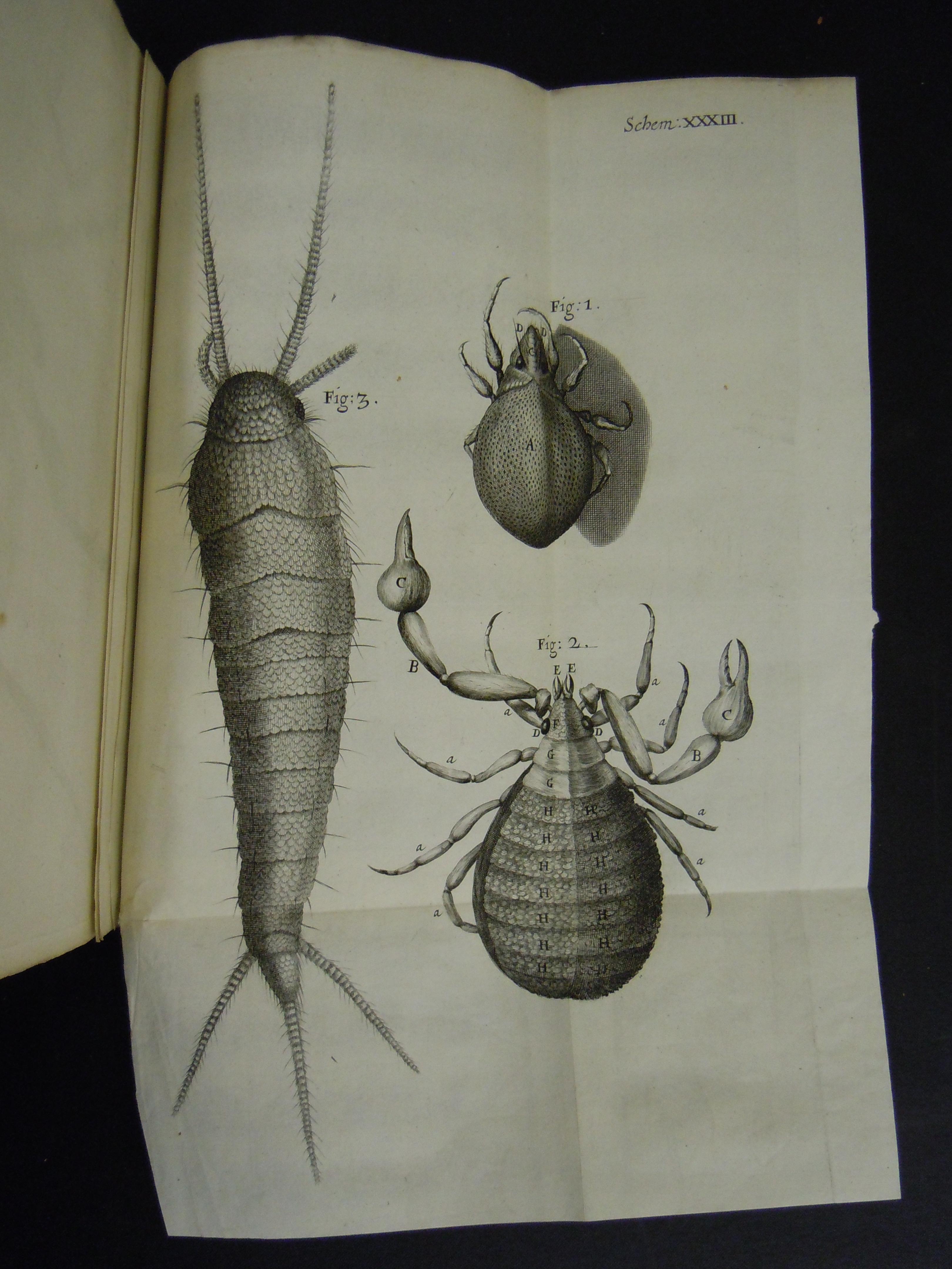 BT1.31.14, pl. xxxiii, Robert Hooke's Micrographia, 1665
