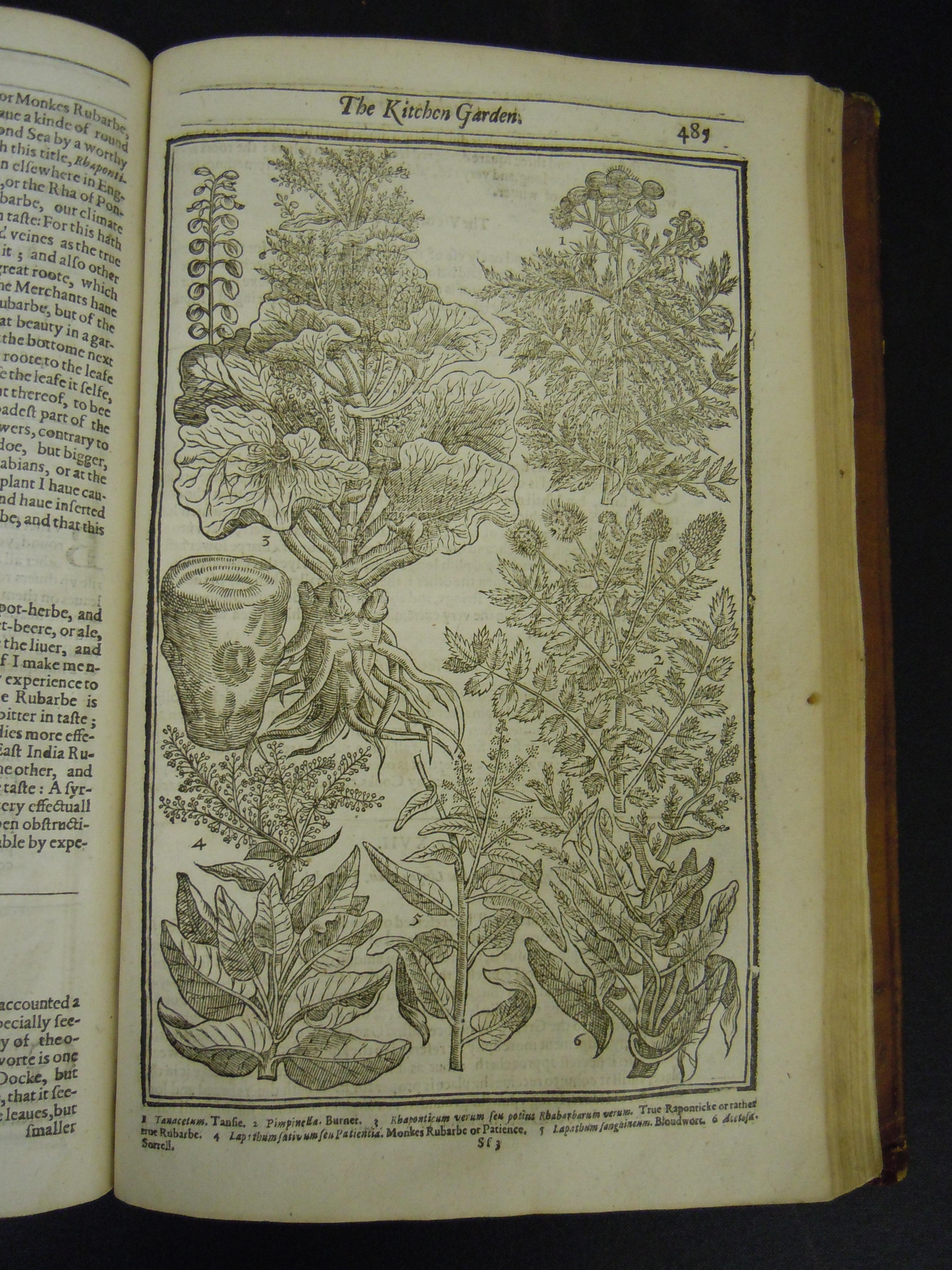 BT1.31.13, p.485, John Parkinson's Paradisi in sole paradisus terrestris, 1629