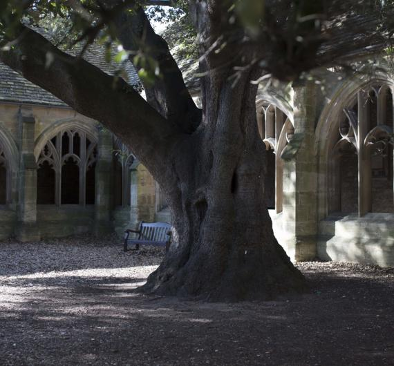 Cloisters Tree